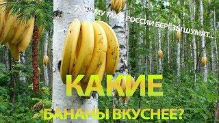Какие бананы вкуснее?