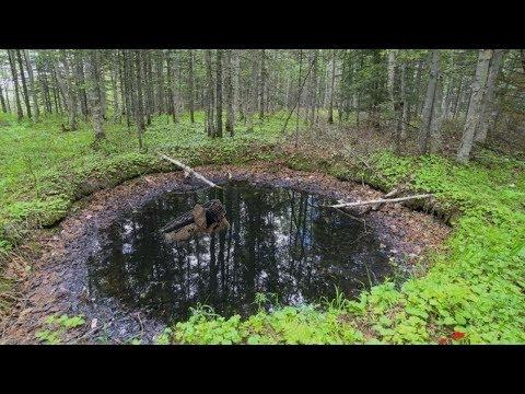 Думал это просто болото в лесу, но оказалось, что там кто то жил....
