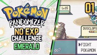 No EXP Challenge Randomizer   Pokemon Emerald #1