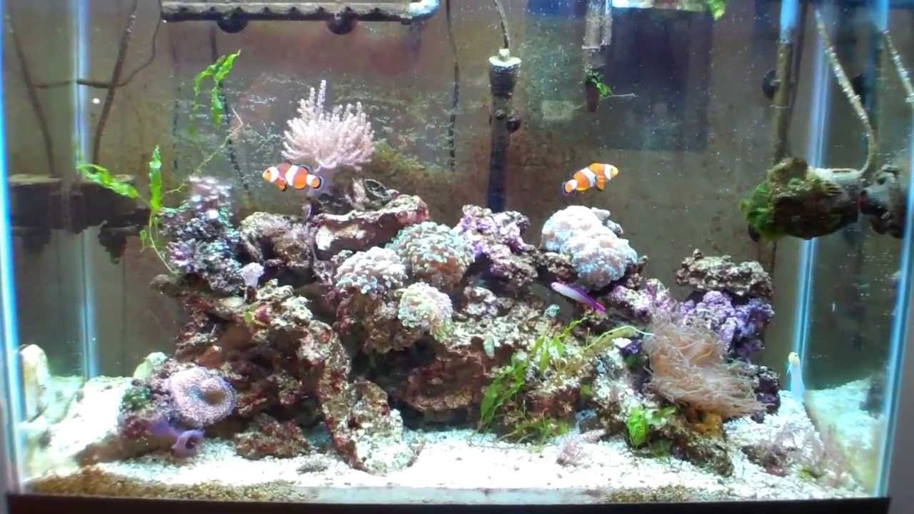 Anyone Want A Kenya Tree Coral Youtube