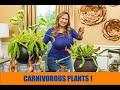 Carnivorous Plants 3 Easy Plants for Beginners