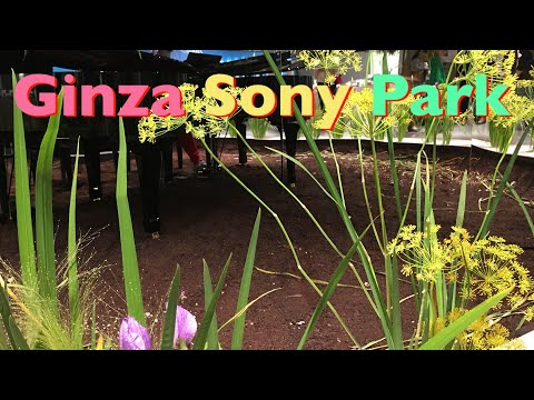 my-piano-performance-at-ginza-sony-park-倉木麻衣さんのsecret-of-my-heart-米津玄師さんのパプリカ