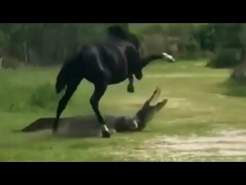 Версус! Лошадь против крокодила и другие эпичные битвы животных!