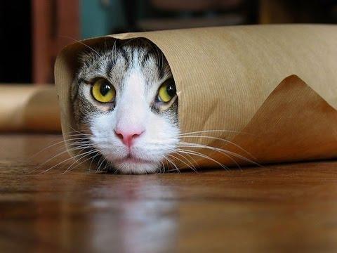 varför är katter rädda för gurkor