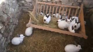 Содержание кроликов в яме - нам 2.5 месяца