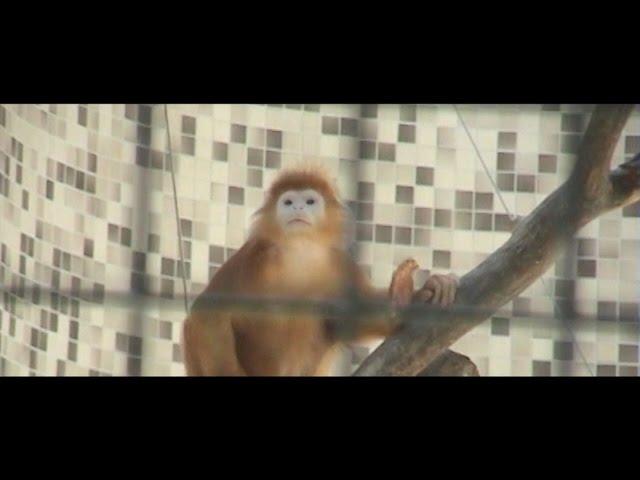 Juicy Gay - Wolken Vorbei (Official Video)