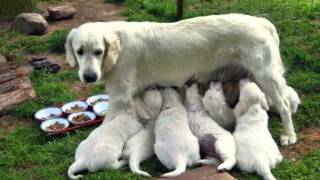 Собаки самые верные друзья людей