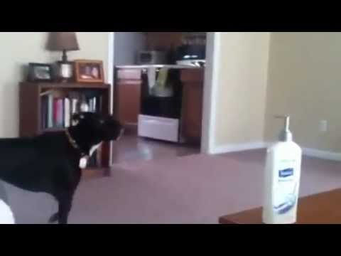 Dog Scared of Ceiling fan
