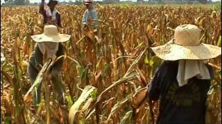 Asia's First: The Bt Corn Story in the Philippines