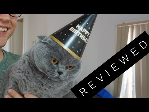 British Shorthair Cat Review after 3 years