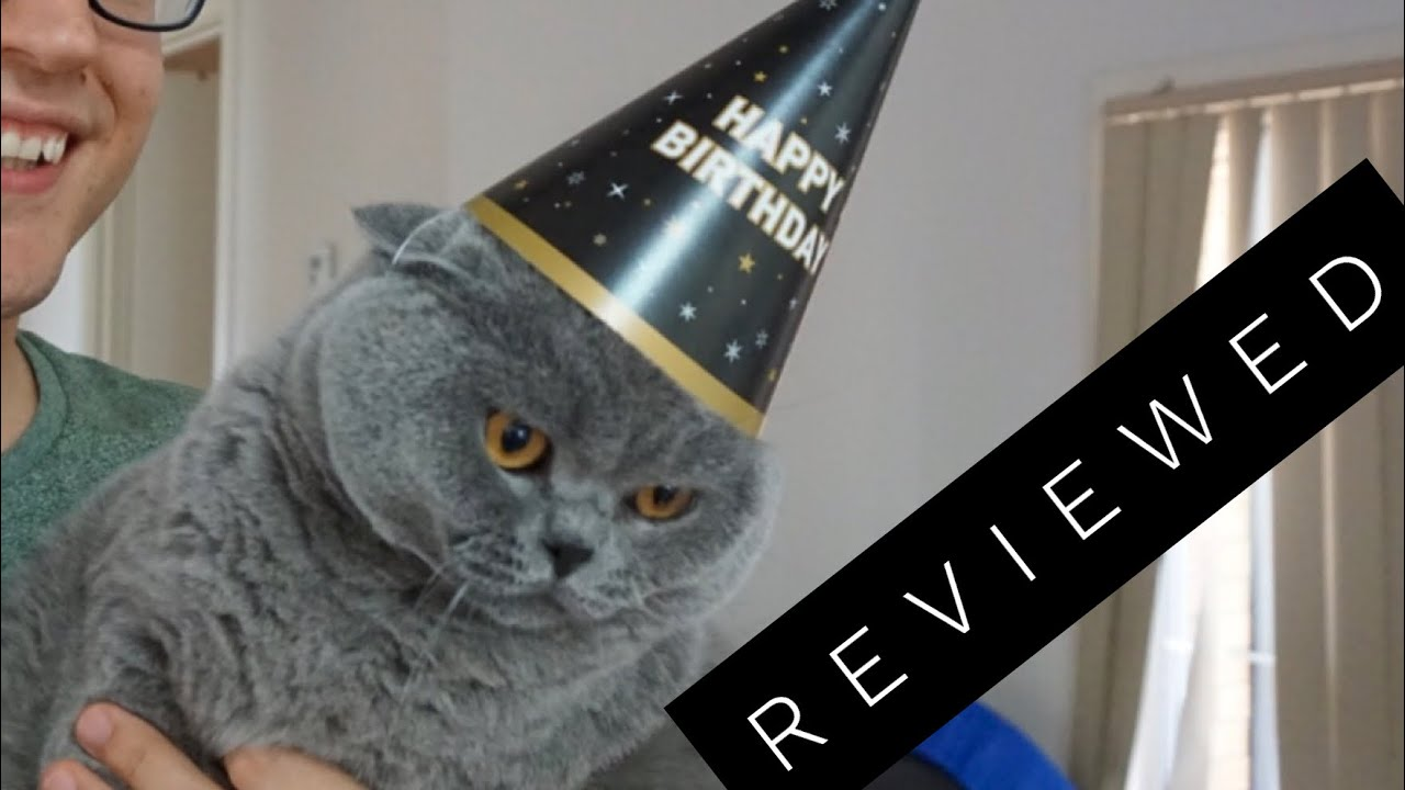 Basil The British Shorthair Cat Review After 3 Years Youtube