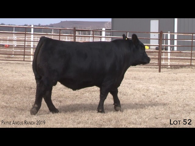Payne Angus Ranch Lot 52