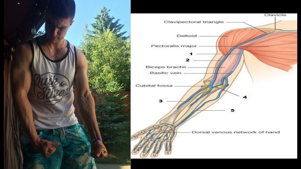 how to get the bicep vein - YouTube
