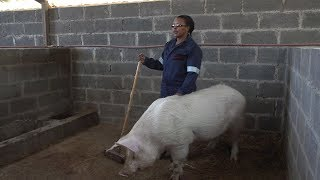 Meet Constance: Math Teacher and Pig Farmer from Lesotho