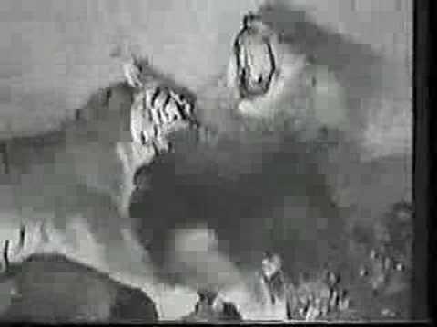 Bengal Tigress vs Asiatic Lion (No death)