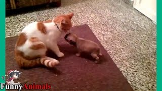 Cat and New Puppy Meeting For The First Time Videos Compilation 2017