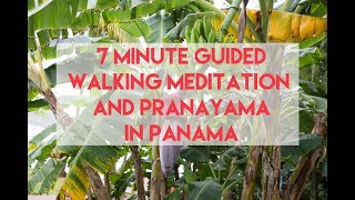7 Minute Guided Walking Meditation and Pranayama in Panama