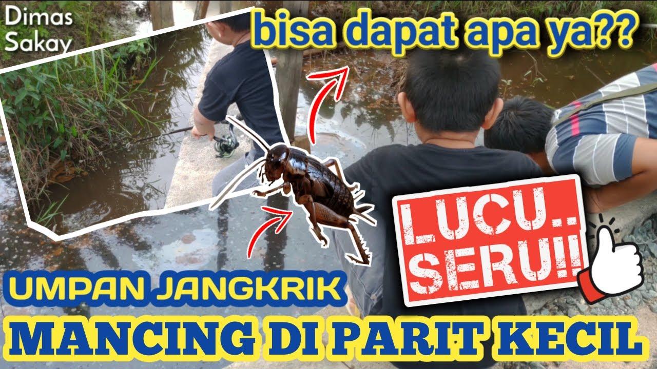 Mancing Ikan Di Parit Kecil Di Pinggir Jalan pakai Umpan ...