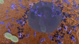 видео Азитромицин