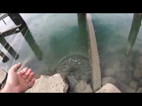 Port River Salmon Trout
