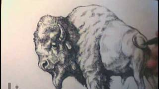 Drawing an American Buffalo (Bison) by Igor Lukyanov