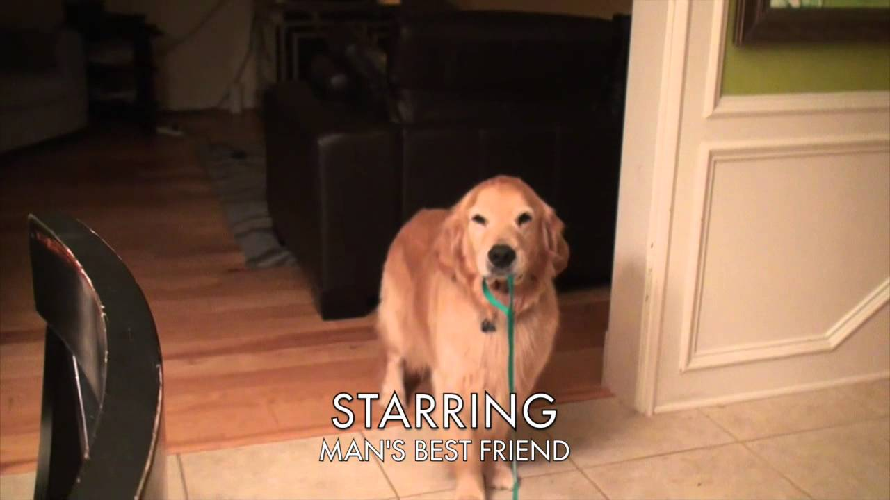 Adorable Dog Reaction Coming Home From College Youtube
