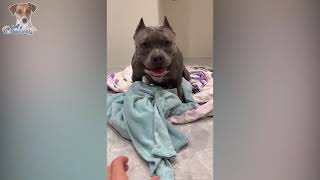 Angry - Funny Dogs & Cats That Will Make You Laugh 😂