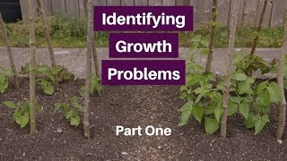 Problem Solver Part 1, Reasons For Slow Growth And Yellow Leaves