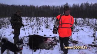 Охота на кабана и лося. Смоленская область. Часть 1.