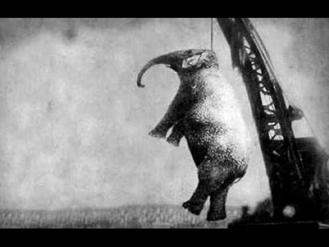 10 Famous Elephants and Their Bizarre Deaths