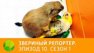 Звериный репортер  Эпизод 10  Сезон 1