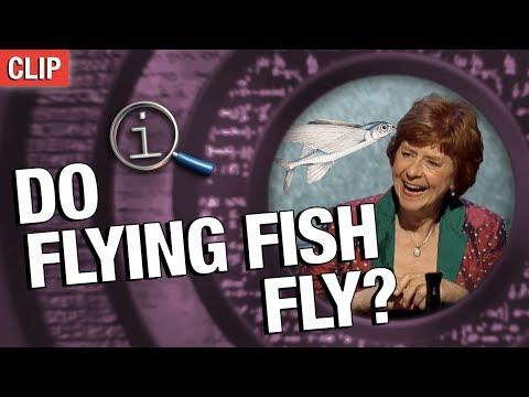 QI | Do Flying Fish Fly?