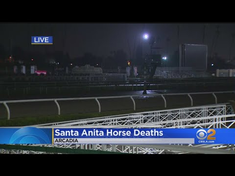 Horse Death Toll At Santa Antia Race Track Rises To 20 – Los Angeles Alerts