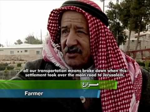 My Beloved Olive: Palestinian Farmers On their Land