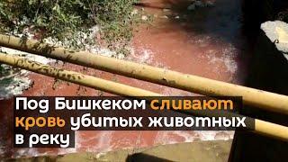 Под Бишкеком сливают кровь убитых животных в реку