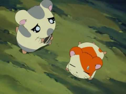Hamtaro episode 1 from YouTube · Duration:  21 minutes 23 seconds
