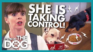 The Real Cause of Food Guarding Showdowns Surprises Victoria  | It's Me or the Dog