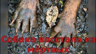 Собаку похоронили, но она выбралась из под земли и осталась жива!