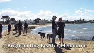 German Shorthaired Pointrs Australia ~ Melbourne Gathering  January 2015 @ Brighton Dog Beach