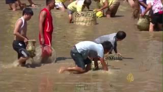 مهرجان في الصين لصيد أسماك الكارب