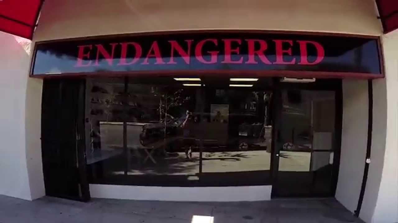 c8c71285145 New Sneaker Shop! EndangeredLA Channel (Video 1) - YouTube