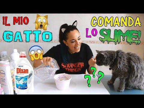 IL MIO GATTO COMANDA IL MIO SLIME! (DIFFICILISSIMO) Iolanda Sweets