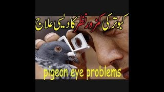 kabootar ki  ank nazar ka elaj|| pigeon eye infection