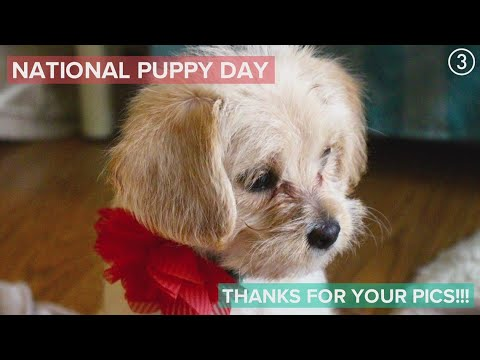 PHOTO GALLERY: National Puppy Day 2020
