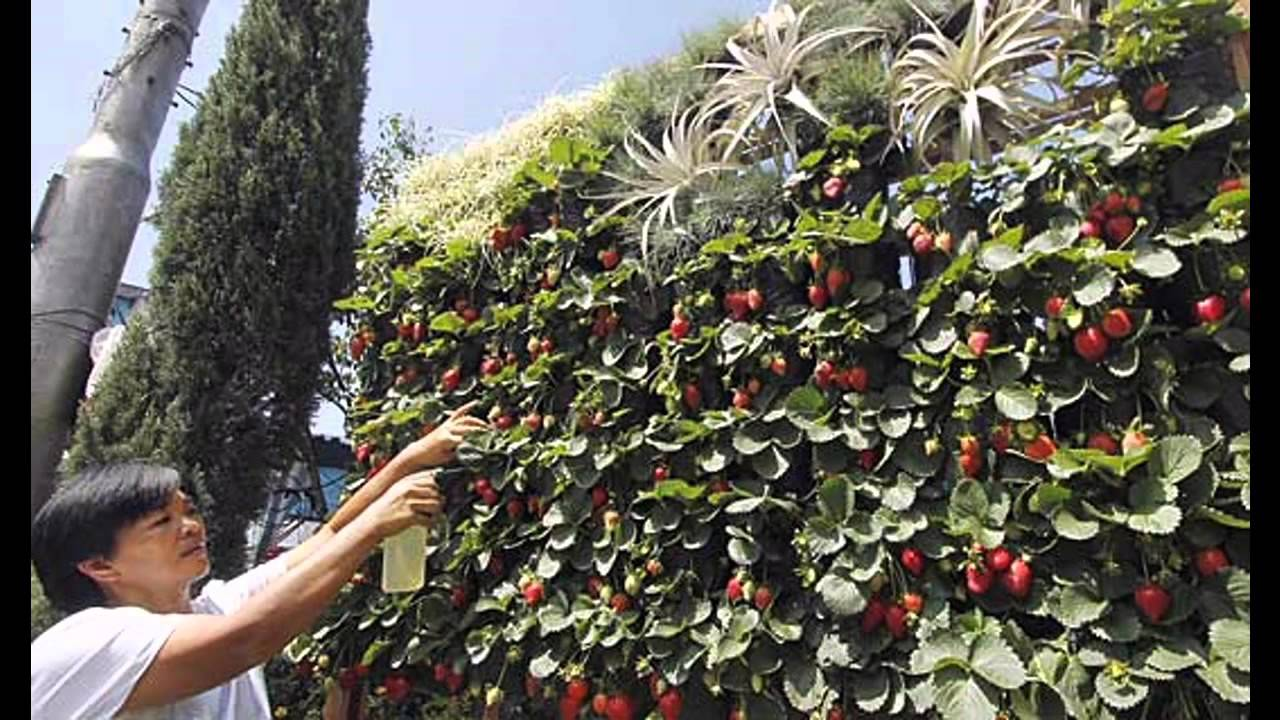 Ideas for vertical strawberry planter youtube