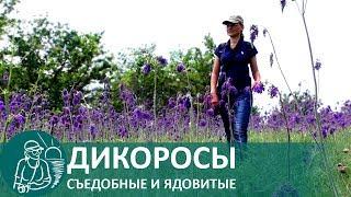 видео Растения Донских степей