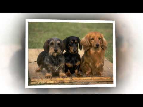 Фото собак разных пород.Слайд шоу