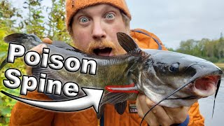 Fishing Catch & Cook Catfish, Day 6 Of 7 /  Wilderness Living Challenge  S04E07  Survival