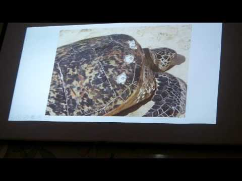 Mr  Willis' Awesome Marine Biology Book   Chapter 27   Sea Turtles