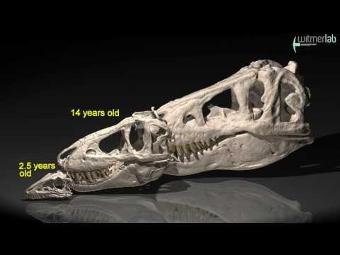 Skull growth in the Mongolian tyrannosaur Tarbosaurus